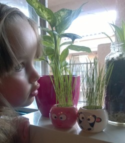Watching our plants grow