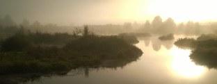 wetlands Tualatin